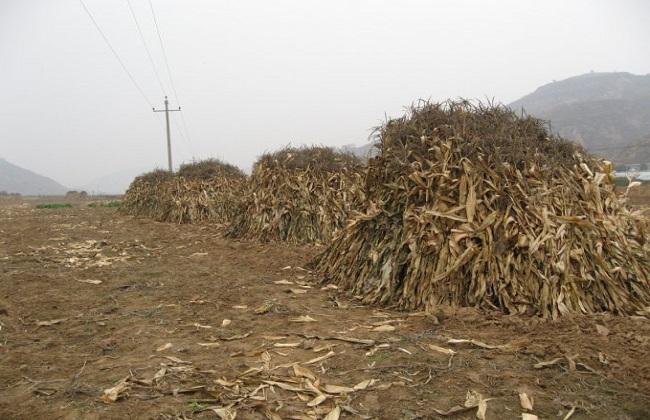 秸秆利用项目农民创业