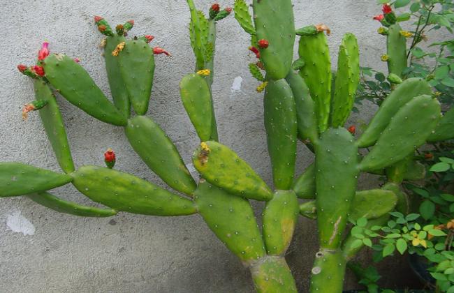 仙人掌烂根烂茎怎么办图片