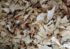 白芨的种植前景