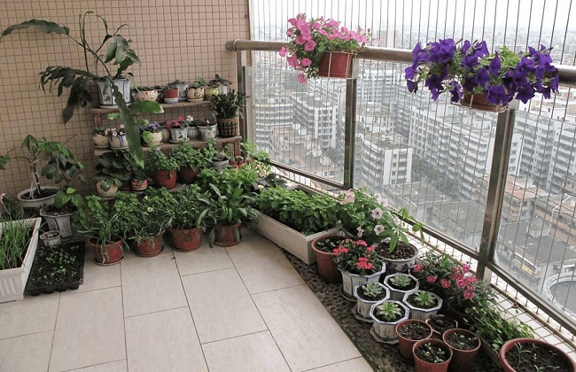 人不在家怎么浇花