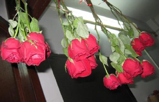 玫瑰干花制作方法