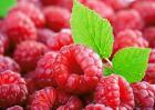 树莓的功效与作用