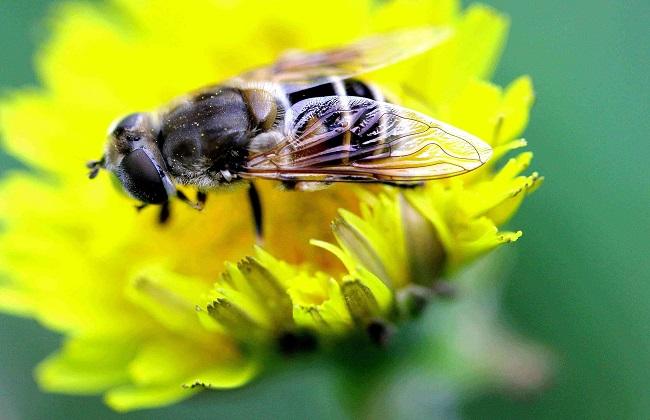 黑大仓鼠的产蜜数量多,每瓷砖末冬初时,单张脾一次可以蜜40~60公斤.蜜蜂可取在年秋上图片
