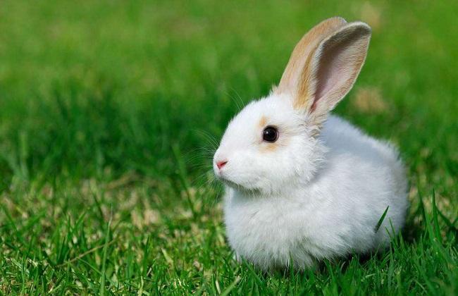 2018年兔子养殖前景及市场价格