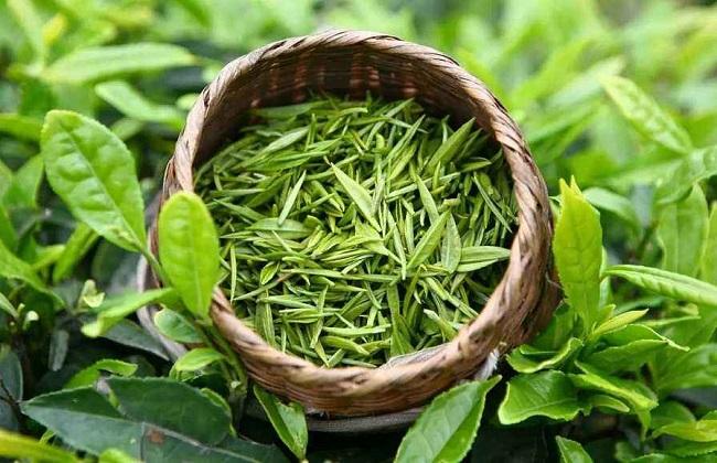 茶叶的品种简介及图片大全