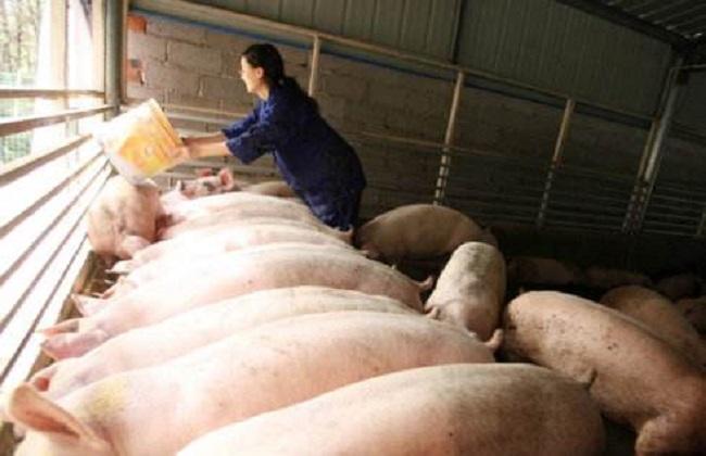 2018养猪成本及利润
