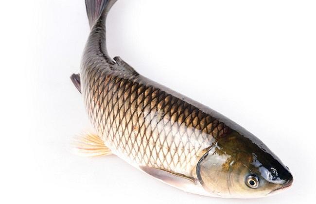 2018年草鱼的价格多少钱一斤及养殖行情