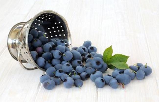 吃蓝莓有什么好处