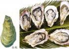 牡蛎和生蚝的区别
