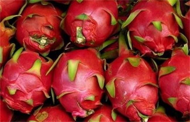 火龙果是热性还是凉性