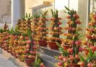 火龙果的盆栽种植方法