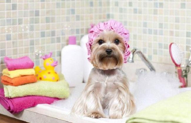 怎么给狗狗洗澡最好