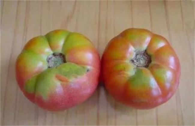 西红柿转色不均匀的原因和解决方法