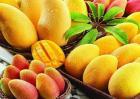 芒果的种植前景