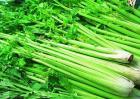 芹菜的种植方法与时间