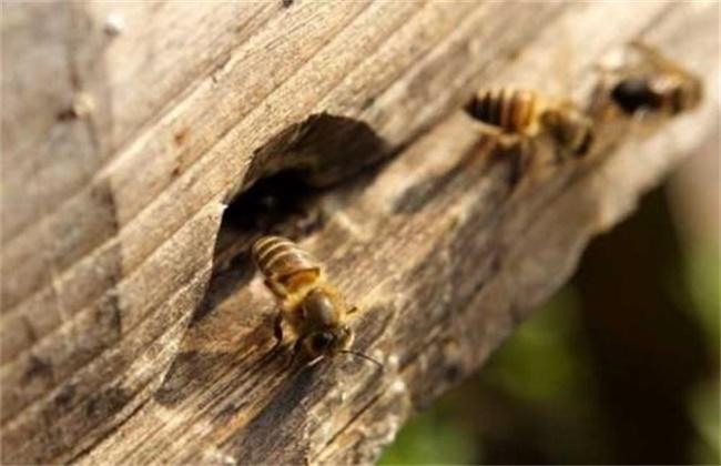 蜜蜂为什么能找到回家的路