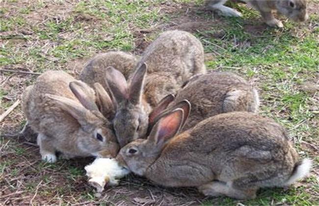 野兔养殖的成本和利润
