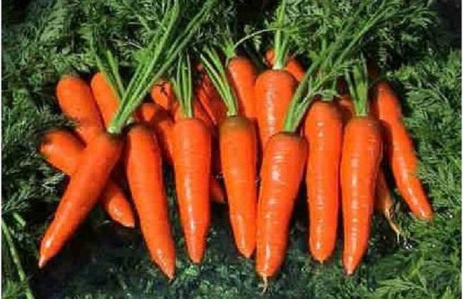 胡萝卜的种植方法与时间