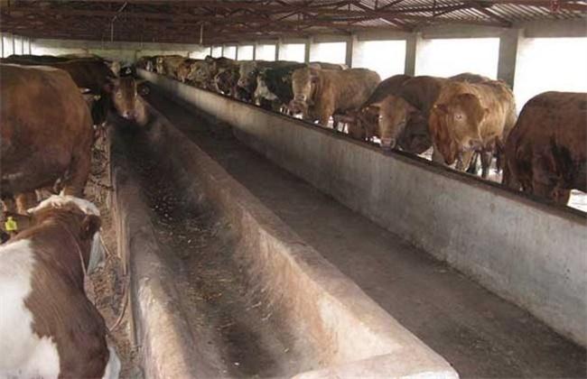 养牛的成本和利润介绍