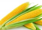 玉米收割的时间与方法