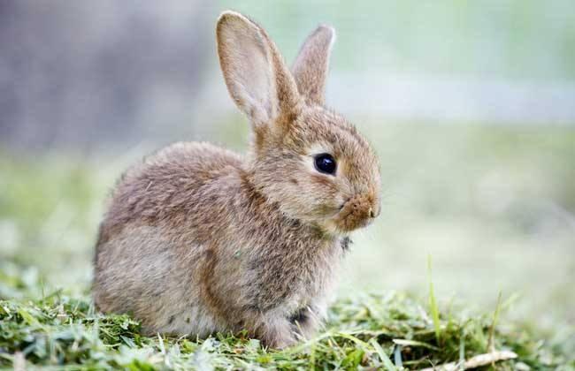提高幼兔成活率的方法
