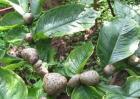魔芋的种植方法和时间