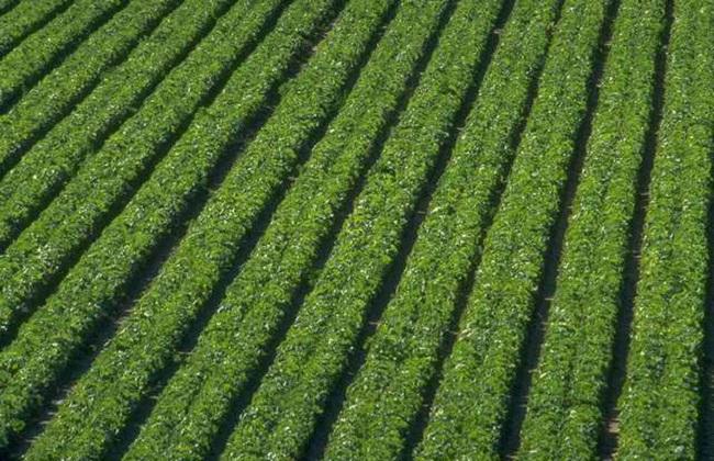 农村适合种植什么