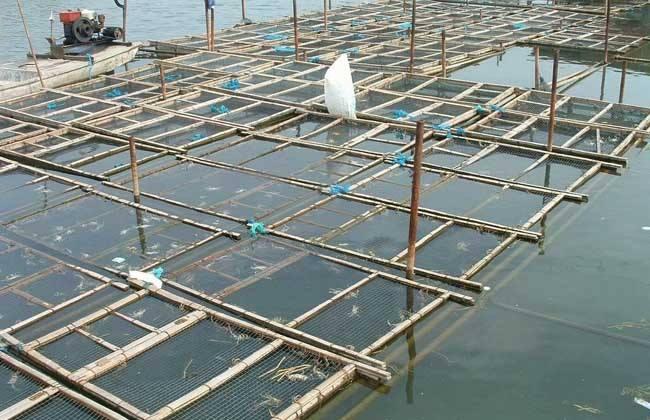 大闸蟹的养殖条件