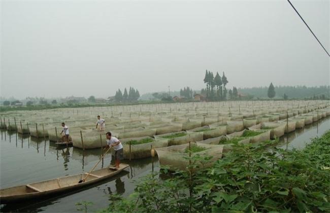 黄鳝养殖安全越冬方法