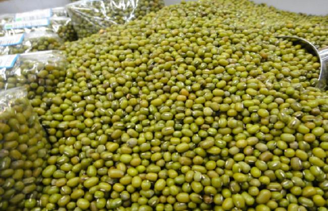 绿豆的种植方法与时间