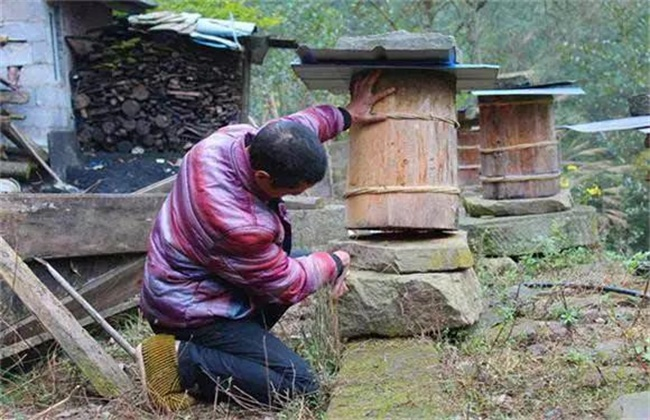 蜜蜂越冬的注意事项