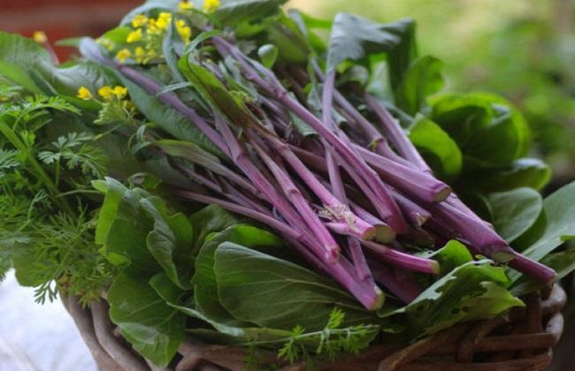 红菜苔的栽培技术