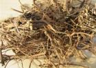 柴胡的种植时间及方法
