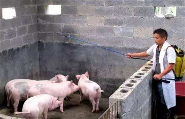 母猪产仔少的原因