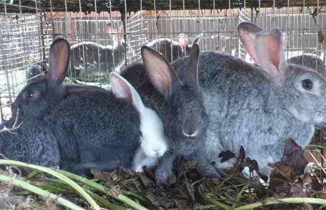 养兔不赚钱的原因分析