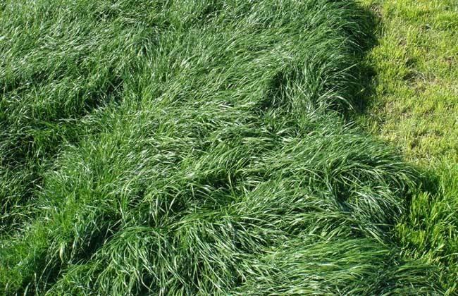 牧草的科学加工和青储技术