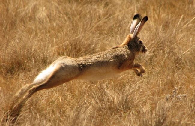 2018养殖野兔赚不赚钱及养殖前景