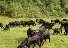 常见的几种养羊模式