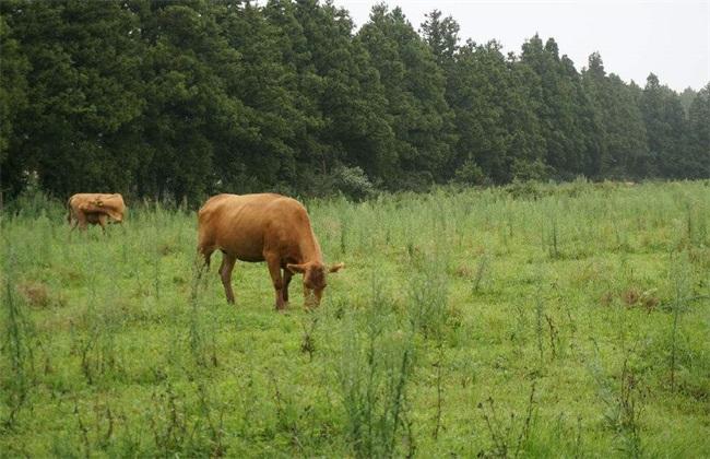 常见病 奶牛 肉牛