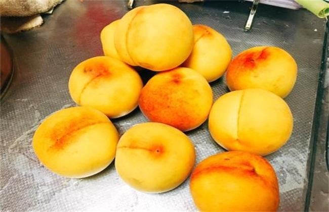 黄桃种植注意事项