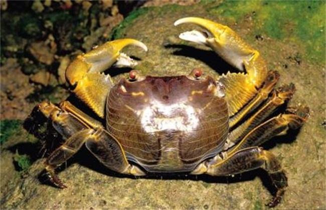 螃蟹混养方式