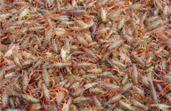小龙虾养殖模式