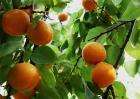 湖南适合种植什么水果