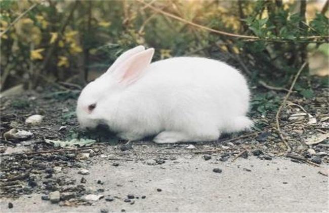 兔子养殖方向