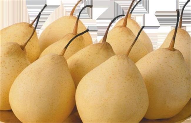 梨子的常见品种