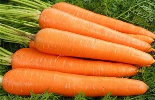 如何防治胡萝卜黑腐病