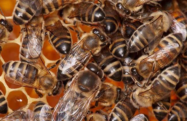 蜜蜂养殖中常见的几大误区