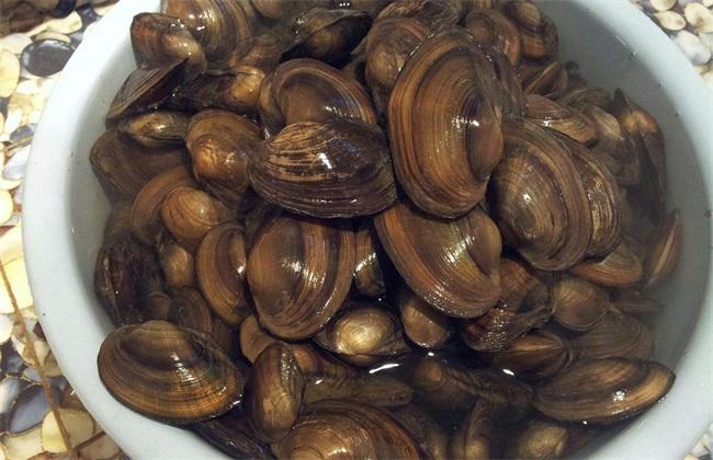 养殖河蚌的创业前景如何?市场潜力好吗?