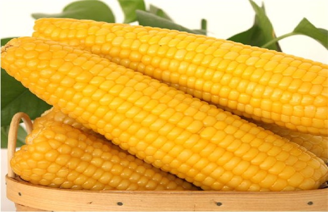 玉米 原因 多穗