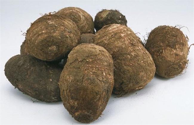 芋头 条件 种植